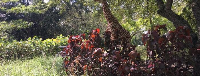 Safari Trek is one of Posti che sono piaciuti a Kon.