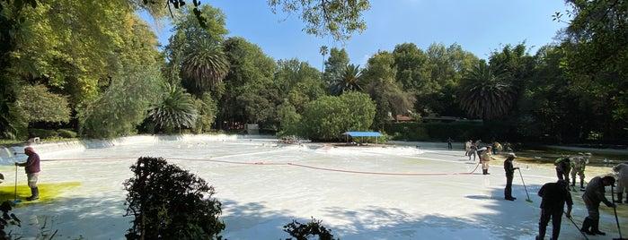 Estanque de Patos Parque México is one of Orte, die Ye gefallen.