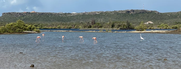 Jan Kok Flamingo Trail is one of Curaçao Trip.