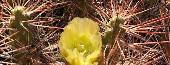 Cañon Los Cactus is one of Cristian 님이 좋아한 장소.