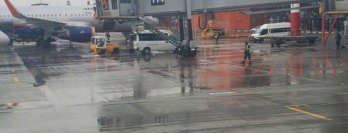 Terminal B is one of Locais curtidos por Olga.