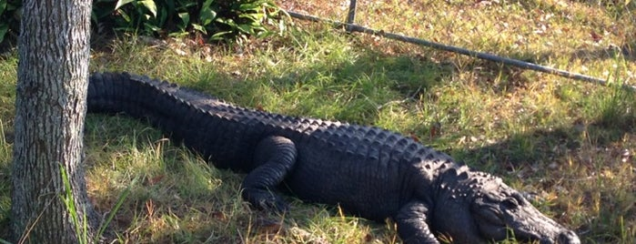 Alabama Gulf Coast Zoo is one of Travelling.