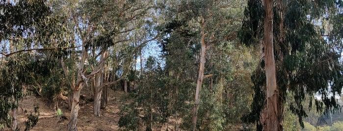 Pine Lake Park is one of Locais salvos de Paresh.