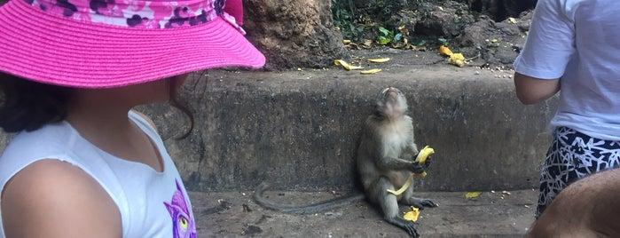 Monkey Cave (Suwan Kuha Temple) is one of Lugares favoritos de Ladybug.