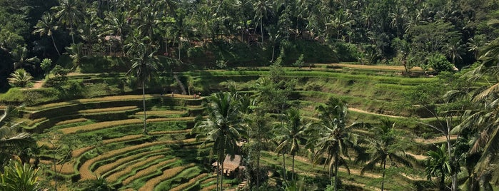 Tegallalang Rice Terraces is one of Shelomentsevさんのお気に入りスポット.