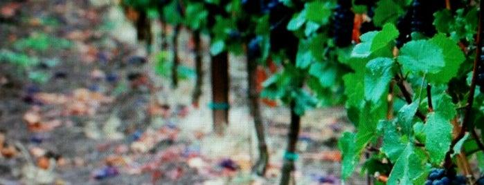 Mongollon Rim Winery is one of Phoenix.