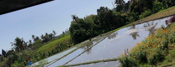 SizzleWraps is one of Bahar'ın Bali'si.