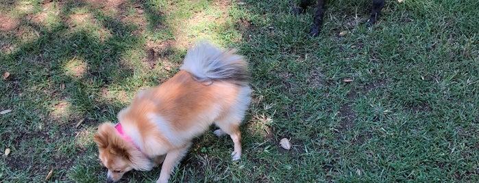 Wattles Dog Park is one of LA.