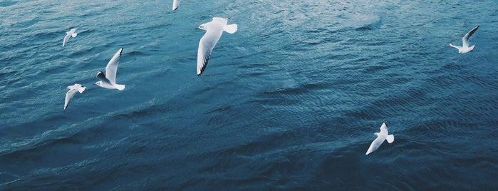 Bosphorus Boat Tour is one of Orte, die Maria gefallen.