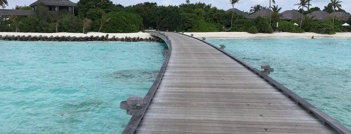 Hurawalhi Maldives is one of Locais curtidos por Petter.