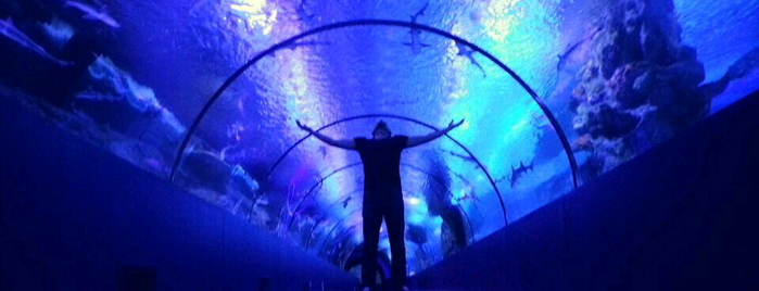 Antalya Aquarium is one of Locais curtidos por Gürk☆n.