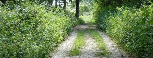 Green Spaces in Harringay