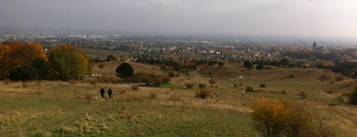 Perchtoldsdorfer Heide is one of Locais curtidos por Karl.