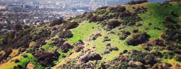 Runyon Canyon Summit is one of Locais curtidos por Moe.