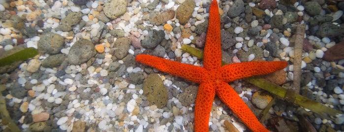 Playa Isleta Del moro is one of Lugares favoritos de Ana Isabel.