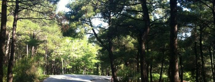 Δάσος Νυμφαίας is one of สถานที่ที่บันทึกไว้ของ Pavlos.