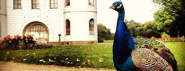 Pfaueninsel | Peacock Island is one of Parks - Berlin's green oases.