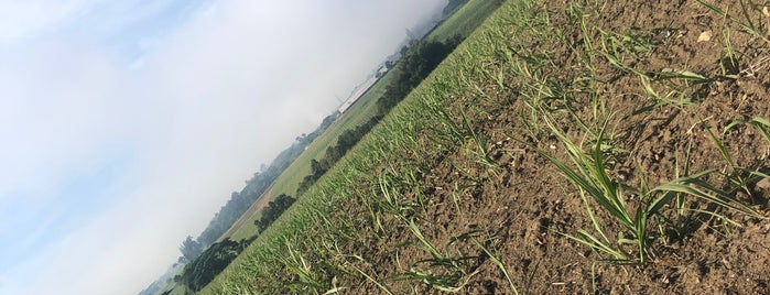 Worthy Park Sugar Plantation is one of Jamaica Trip.