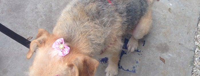 Pet Wash Petshop: banho, tosa, daycare (creche) e veterinária. is one of Mundo em lugares.