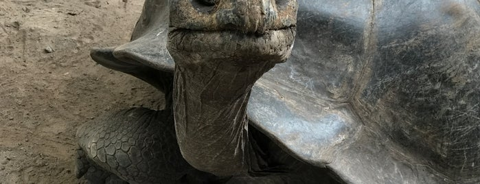 "Centro de Crianza de Tortugas Gigantes ""Arnaldo Tupiza Chamaidan"" is one of Islas Galápagos."