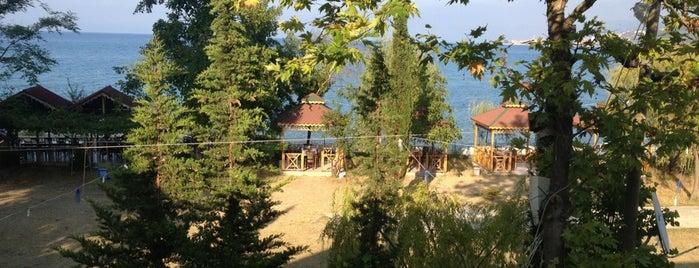 Demircan Balık Lokantası is one of orta karadeniz.