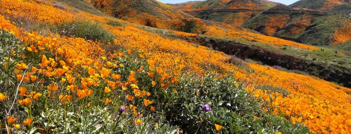 Walker Canyon Poppy Fields is one of Tempat yang Disukai Paul.
