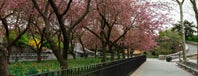 Carl Schurz Park is one of NYC.