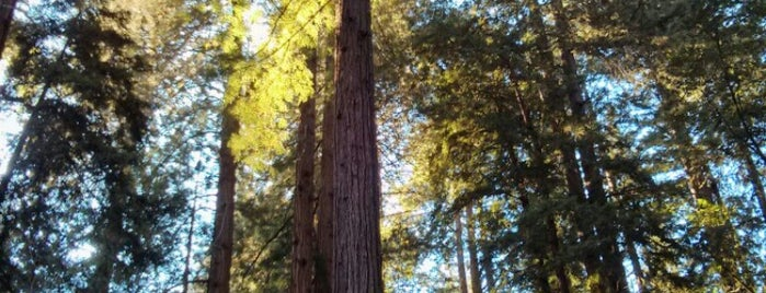 Muir Woods National Monument is one of Marin County, CA.