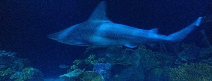 Shedd Aquarium is one of Chicago Must.