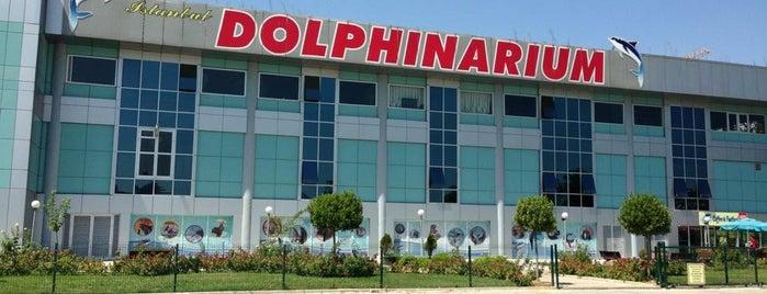 Dolphinarium is one of İstanbul'un Gezilmesi Görülmesi Gereken Yerleri.