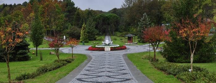 Atatürk Arboretumu is one of İstanbul'un Gezilmesi Görülmesi Gereken Yerleri.
