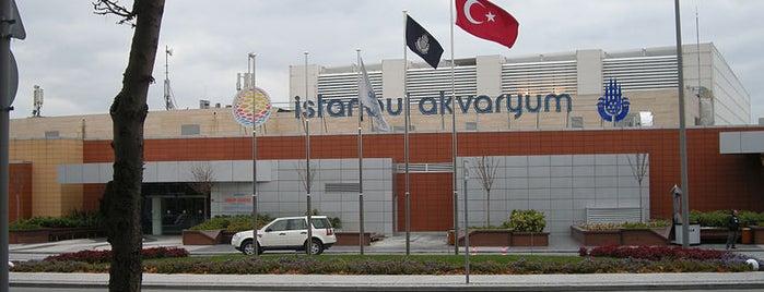 İstanbul Akvaryum is one of İstanbul'un Gezilmesi Görülmesi Gereken Yerleri.