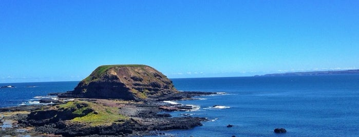 Philip Island is one of Eastern Australia Guide.