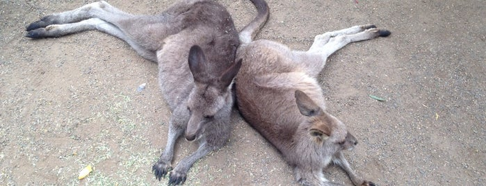 Featherdale Wildlife Park is one of Eastern Australia Guide.