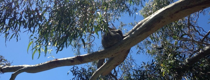 Koala Conservation Centre is one of Eastern Australia Guide.
