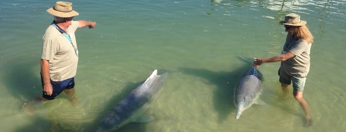 Barnacles Dolphin Centre is one of Eastern Australia Guide.
