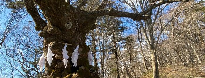 熊野皇大神社のシナノキ is one of T : понравившиеся места.