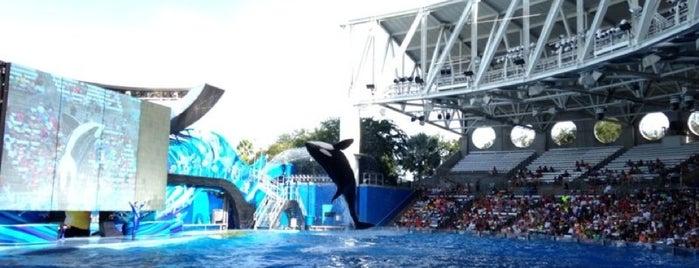 SeaWorld Orlando is one of US - Must Visit ( East Coast).