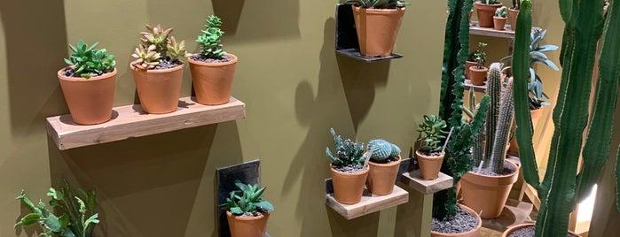 Les Succulents Cactus is one of Lieux qui ont plu à CM.