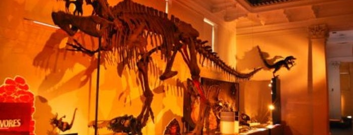 Australian Museum is one of Sydney To Do (mostly free/cheap).