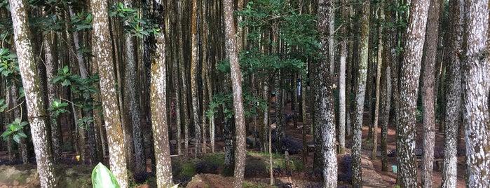 Hutan Pinus is one of Lieux qui ont plu à Juand.
