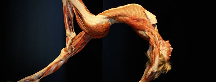 Exposición Body Worlds is one of Edzná 님이 좋아한 장소.