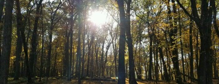 Backbone State Park is one of NE IOWA TRIP.