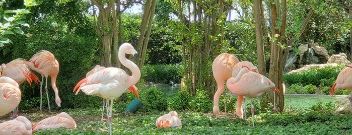 Flamingo Cove is one of SeaWorld San Antonio.