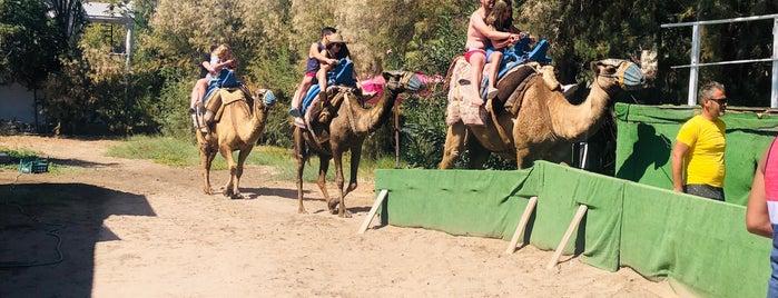 Camel Beach Bodrum is one of Locais curtidos por gamze.