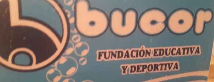 Bucor Fundacion Educativa y Deportiva is one of Gaston 님이 좋아한 장소.