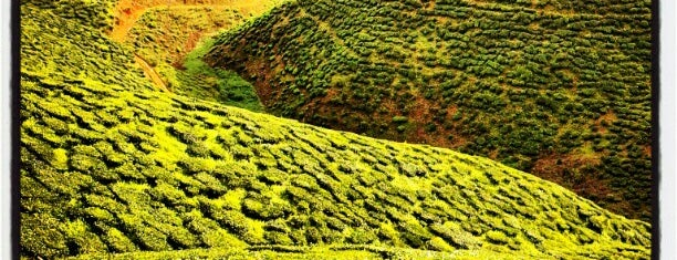 Cameron Bharat Tea Valley is one of Cameron Highlands.