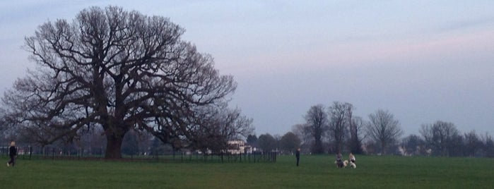 Danson Park is one of The Great Trees of London.