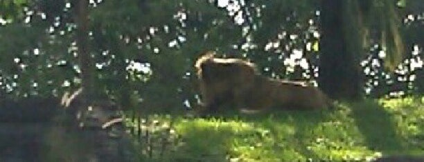 The Lion's Den is one of Best Of DizKnee.