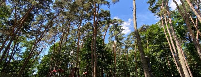 Park Linowy Pomiechówek is one of Posti che sono piaciuti a Marcin.